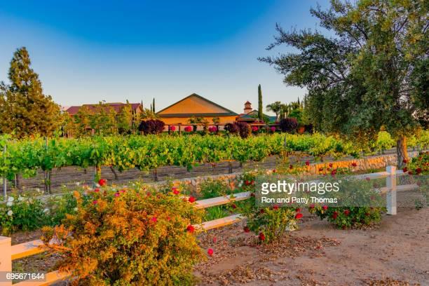 Temecula vineyard. Photo Courtesy of Getty Images.